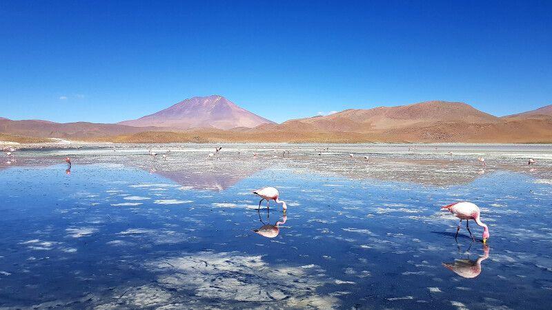 Flamingos in einer Lagune im bolivianischen Altiplano  © Diamir