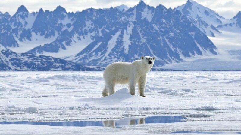 Eisbär © Diamir