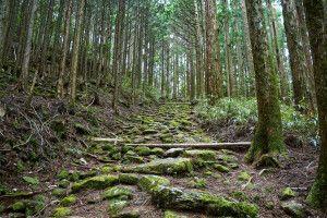urige Wälder entlang des Kumano Kodo Pilgerweges