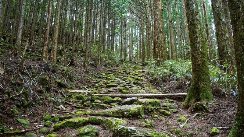 urige Wälder entlang des Kumano Kodo Pilgerweges © Diamir