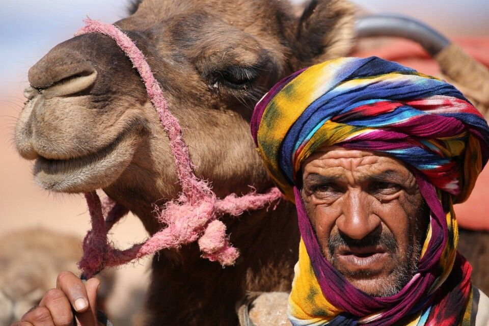 Marokkaner mit Kamel