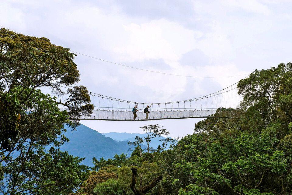 Die Hängebrücke des Baumkronenpfades im Nyungwe Forest