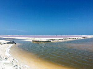 Rosafarbene Salzbecken am Rio Lagartos
