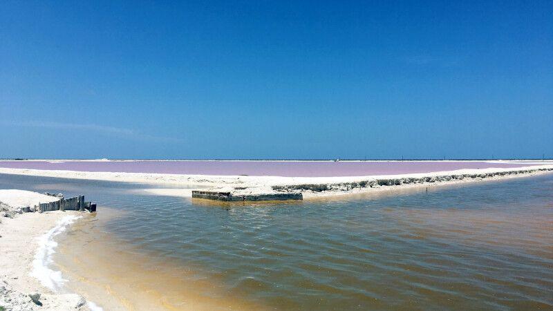 Rosafarbene Salzbecken am Rio Lagartos © Diamir