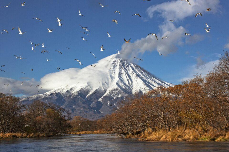 Vulkan Kronotsky und Vogelschwarm