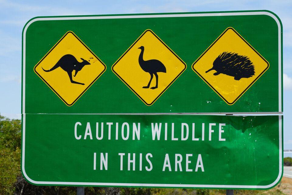 Achtung, Wildlife! Vorsicht ist auf den Straßen Australiens geboten, die Warnschilder erinnern an Känguru, Emu & Co.