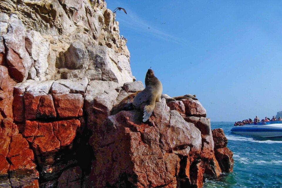 Islas Ballestas, Klein Galapagos von Peru