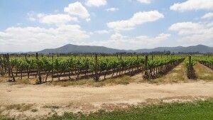 Chilenisches Weingut